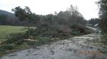 Zásah hasičů u spadlého stromu