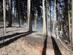 Lesní požár v Čikváskách