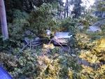 Stromy spadly na zaparkované osobní automobily v Liberci, části Rochlice