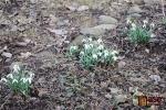 FOTO: Dere se jaro, pupeny pučí