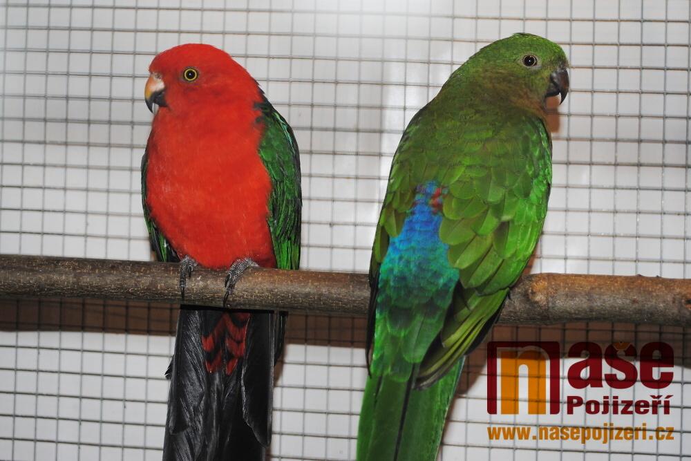 Výstava exotického ptactva a kaktusů v Semilech<br />Autor: Petr Ježek