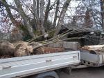 Vysazení aleje dvaceti stromků jeřábu obecného v obci Horka u Staré Paky
