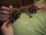 FOTO: Zoo se raduje z okatých dvojčat