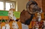 Chovatelská přehlídka trofejí zvěře v Dolní Branné