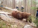 FOTO: Koně postavil na nohy až kladkostroj