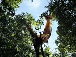 Paraglidista skončil kousek pod startovacím místem na Kozákově v koruně javoru