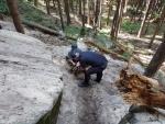 Uvězněný pes se po 16 dnech dostal z liščí nory u Turnova