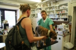 Záchraněný pes, který byl uvězněn 16 dní v liščí noře v Českém ráji u obce Všeň