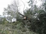 Odstranění vyvrácené vrby, která v Jindřichovicích pod Smrkem ležela na drátech elektrického vedení