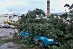 Spadlé stromy v Turnově