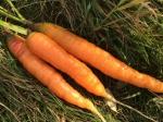 Komunitou podporované zemědělství