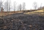 Následky po pálení trávy ve Vratislavicích nad Nisou