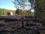 Požár lesního porostu