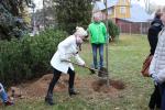 Oslavy 100 let republiky v Harrachově - sázení Stromu svobody