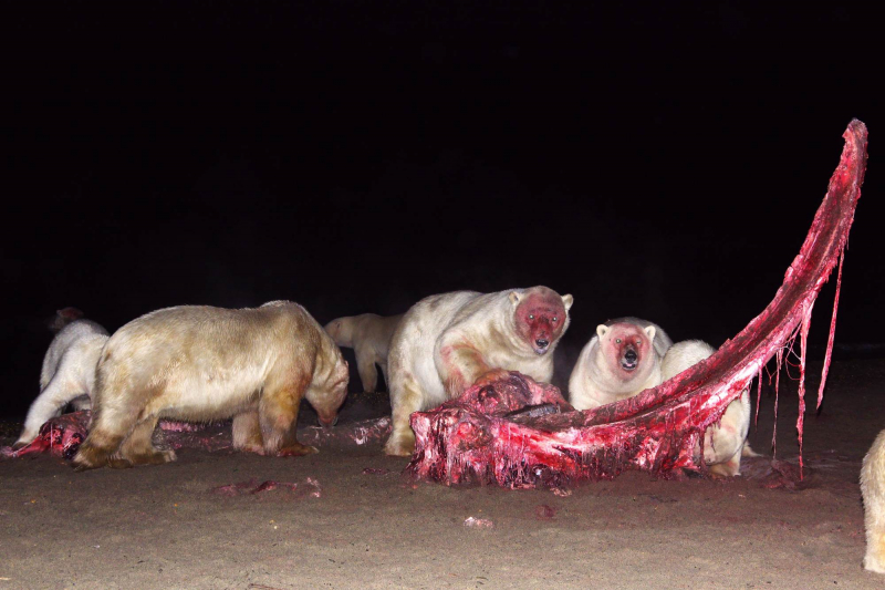 O žranici ledních medvědů budou mimo jiné vyprávět manželé Tylovi<br />Autor: Archiv Dech hor