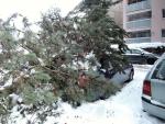 Spadlé stromy na silnice v Libereckém kraji