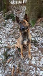 Policejní pes Rooney