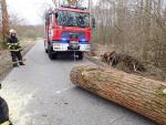 Hasiči odstraňovali ze silnic spadlé stromy
