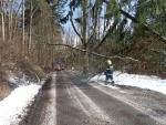 Spadané stromy