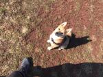 Ztracené štěně Bailey