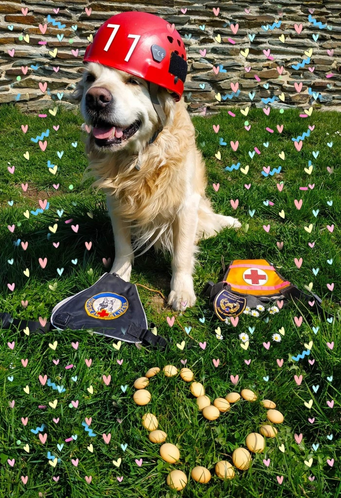 Služební pes HZS Libereckého kraje Charlie při cvičení a zásazích