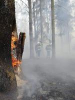 Lesní požár v Hradčanech (Ralsko)