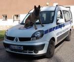 Pes Dar při službě