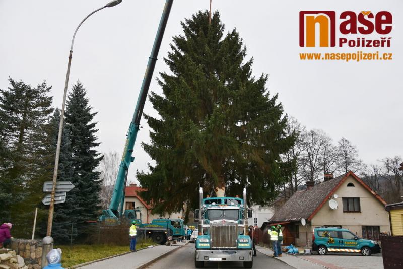 Příprava převozu vánočního stromu v Semilech pro Staroměstské náměstí<br />Autor: Petr Ježek