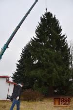 Kácení vánočního stromu v Semilech pro Staroměstské náměstí