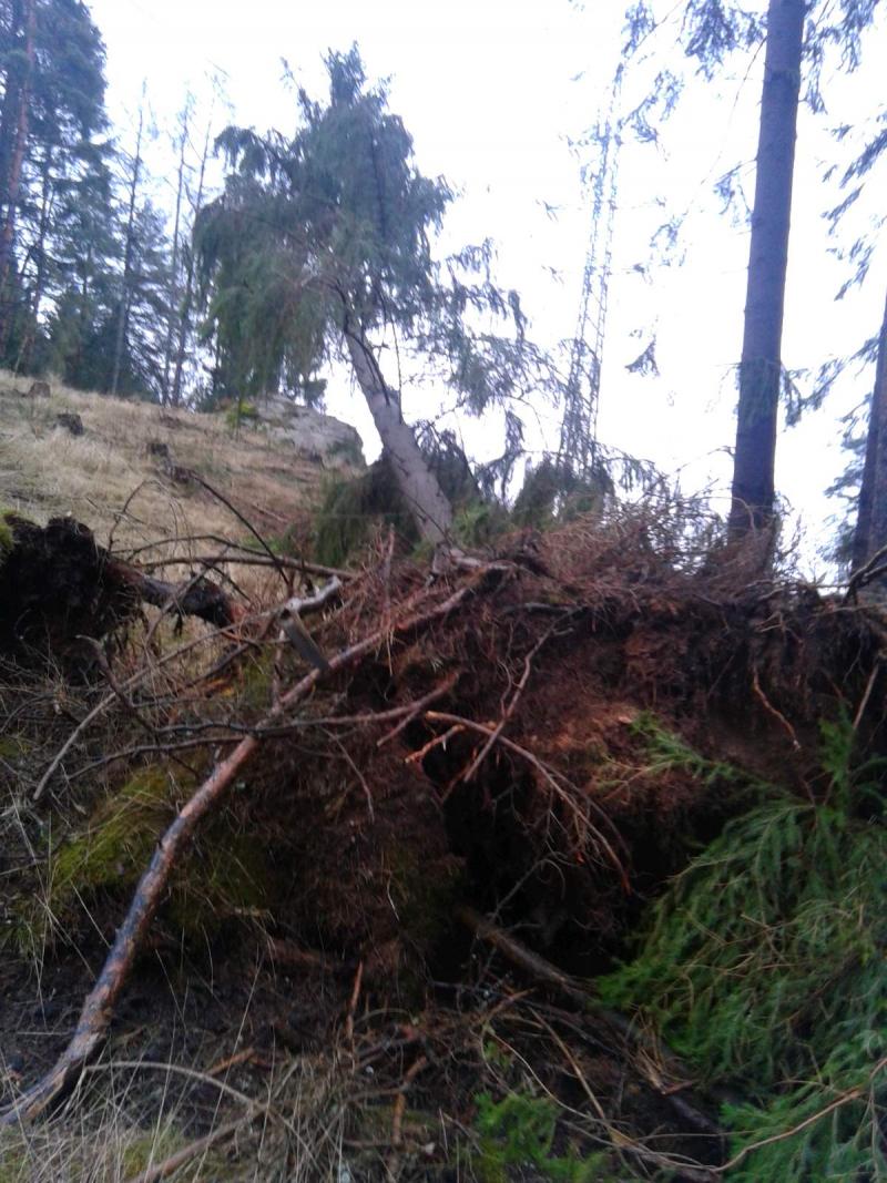 Škody po orkánu Sabine v západních Čechách<br />Autor: Archiv ČEZ