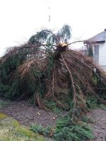 Poškozené stromy po vichřici odstranili, parky v Turnově zpřístupněné