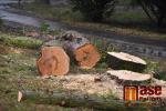 Pokácení vysokých stromů na Tigridově náměstí v Semilech