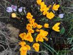 Jaro na zahrádkách