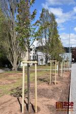 Vysazení nových stromů na náměstí Pavla Tigrida v Semilech
