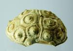 Dosud nepopsaná ježovka z Česka