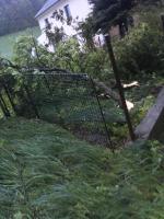 Zlomený strom Petrašovice