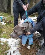 Hasiči vyprostili zaklíněného psa v obci Hrubá Skála