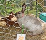 Chovatelé vystavovali v Jilemnici drobné zvířectvo